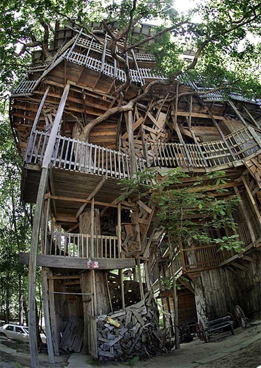 見上げるのが怖いツリーハウスの写真
