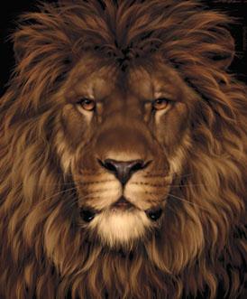 lionmouse-illusion1