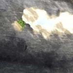 写真から被写体をカンタンに消せてしまうオンラインツール「Webinpaint」