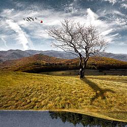 自然が創り出す目の錯覚