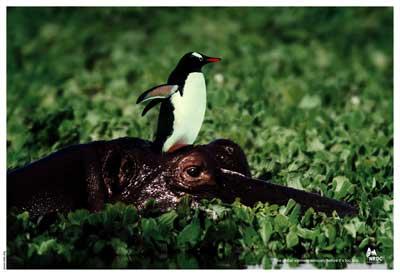 NRDC-Penguin.jpg