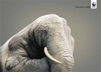WWF-Elephant.jpg
