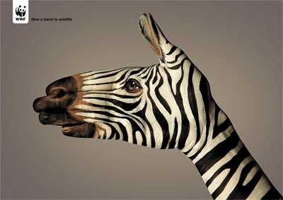 WWF-Zebra.jpg